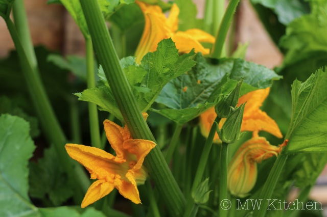 Zucchini Flowers-MW-Kitchen-1
