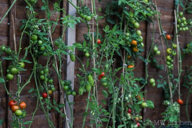 Garden Tomatoes-28